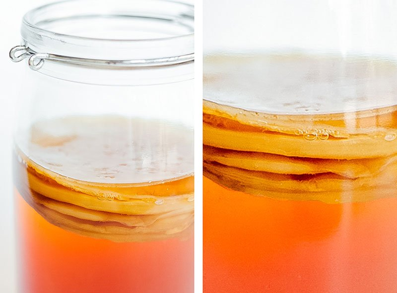 Close up photo of kombucha SCOBY