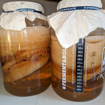 Storing leftover SCOBYS in a SCOBY hotel