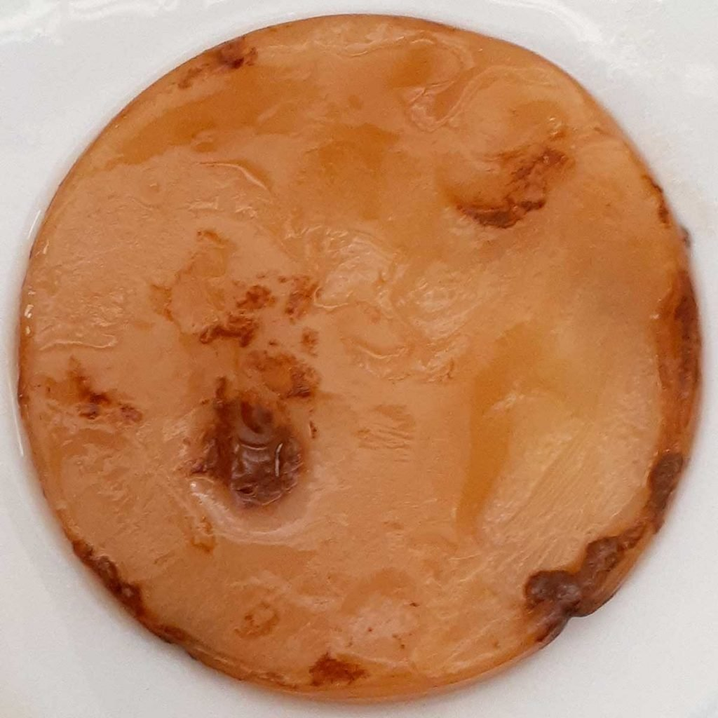 Picture of healthy kombucha SCOBY