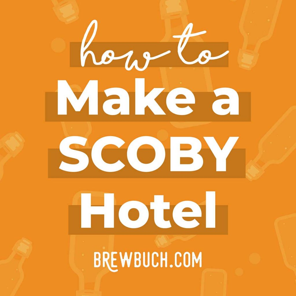 Have extra kombucha SCOBYs that you don't need right now, but want to hold onto? Make a SCOBY hotel! Here's everything you need to know about making and maintaining your five star kombucha SCOBY hotel.